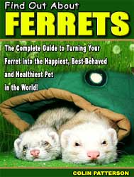 Find Out About Ferrets Review