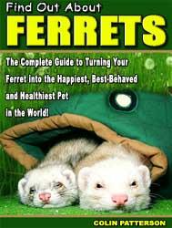 ferret guide